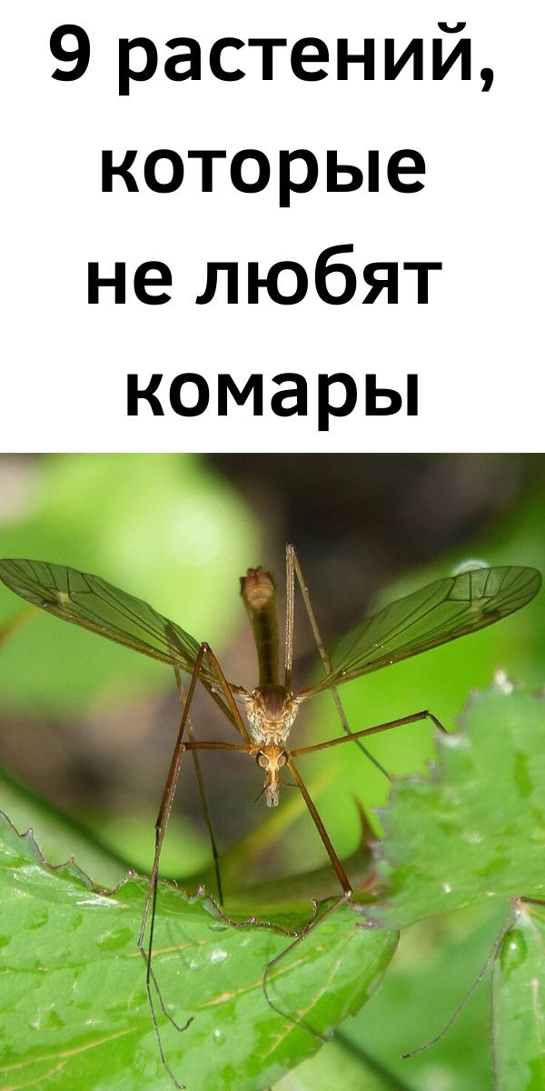 9 растений, которые не любят комары