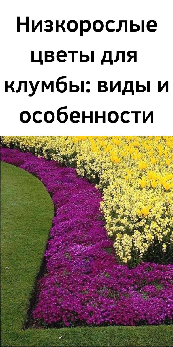 Низкорослые цветы для клумбы: виды и особенности