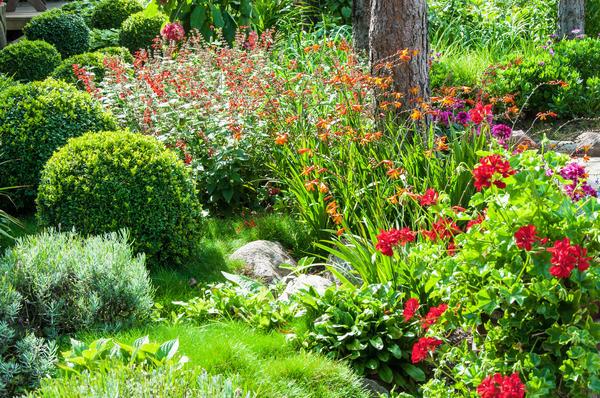6 характеров садовых цветов — зачем нам нужно их знать
