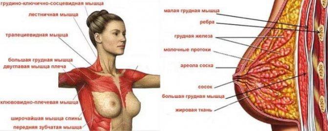 Почему женщинам лучше не качать грудь и что действительно поможет ее «поднять»
