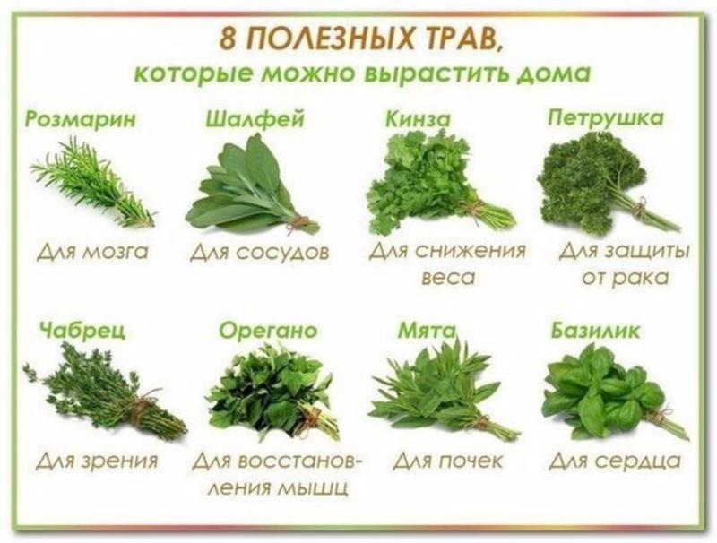 Восемь полезных трав, которые можно вырастить дома