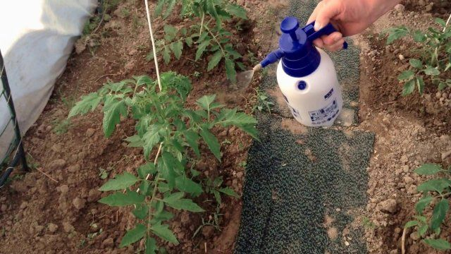 10 способов применения пищевой соды в саду и огороде