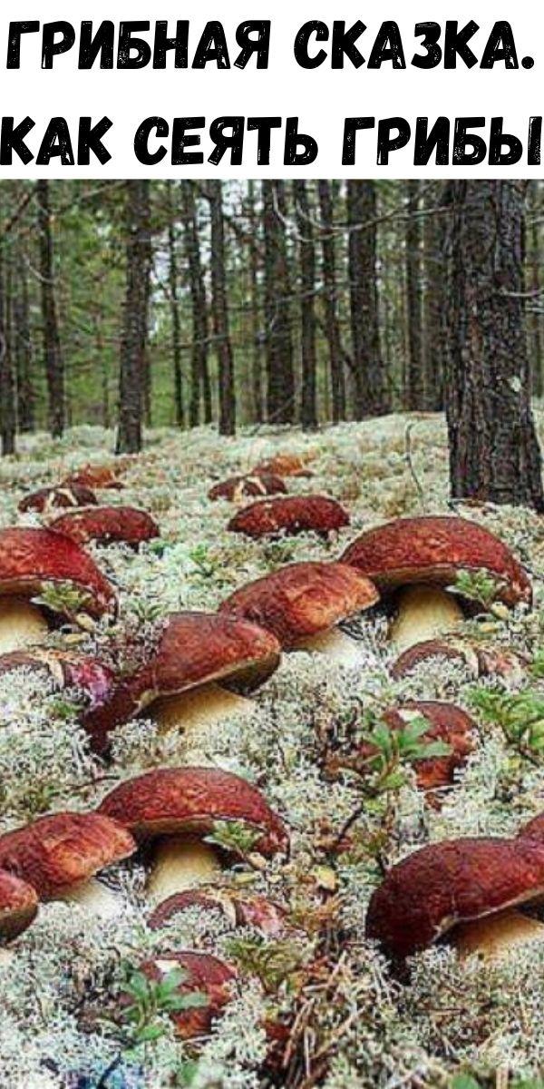 Грибная сказка. Как сеять грибы