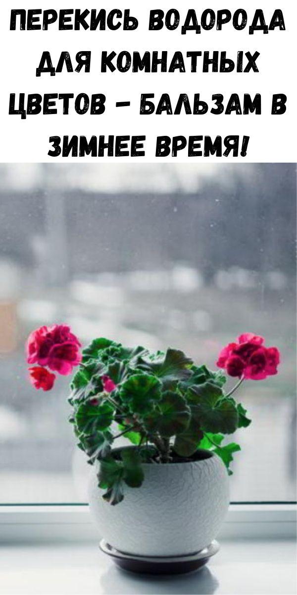 Перекись водорода для комнатных цветов - бальзам в зимнее время!