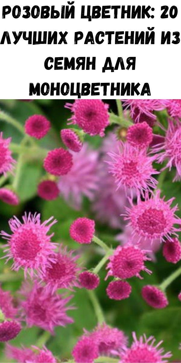 Розовый цветник: 20 лучших растений из семян для моноцветника