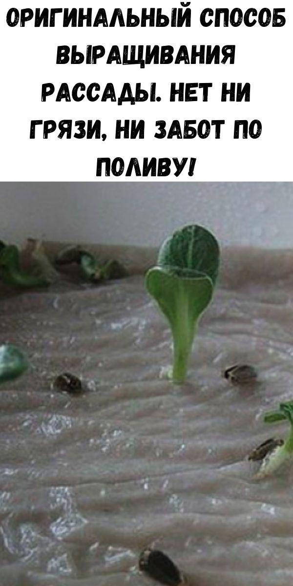 Оригинальный способ выращивания рассады. Нет ни грязи, ни забот по поливу!