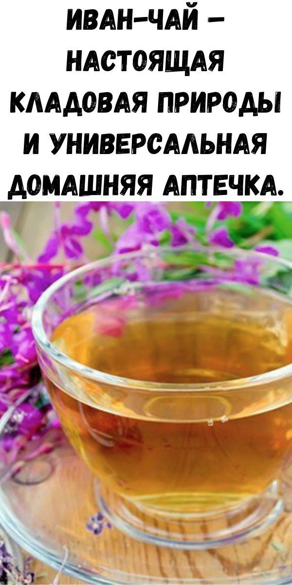Иван-чай – настоящая кладовая природы и универсальная домашняя аптечка.
