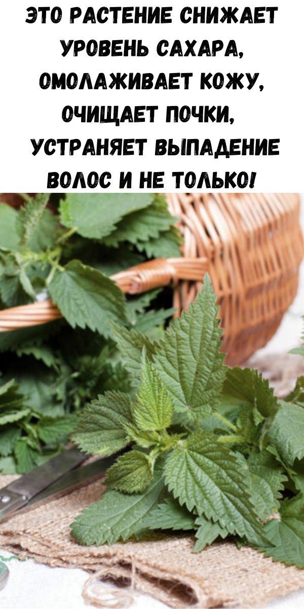 Это растение снижает уровень сахара, омолаживает кожу, очищает почки, устраняет выпадение волос и не только!