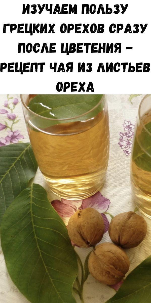 Изучаем пользу грецких орехов сразу после цветения - рецепт чая из листьев ореха