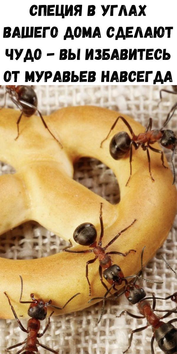 Специя в углах вашего дома сделают чудо - Вы избавитесь от муравьев навсегда