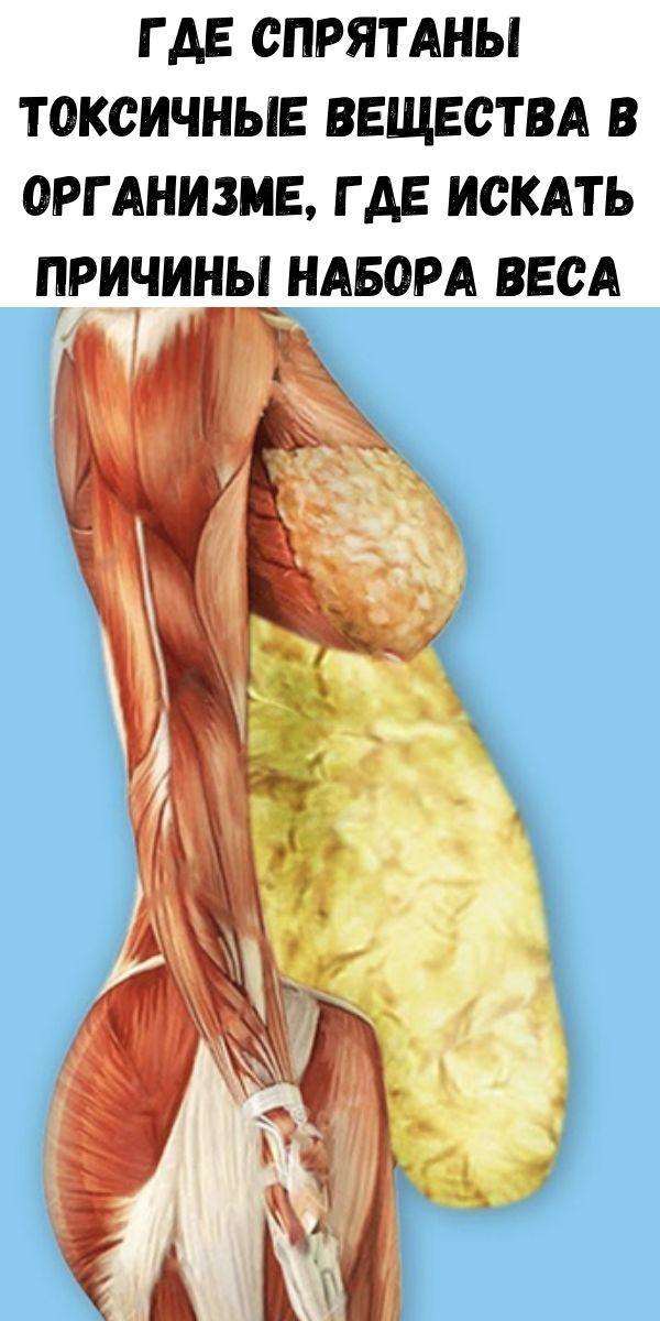 Где спрятаны токсичные вещества в организме, где искать причины набора веса