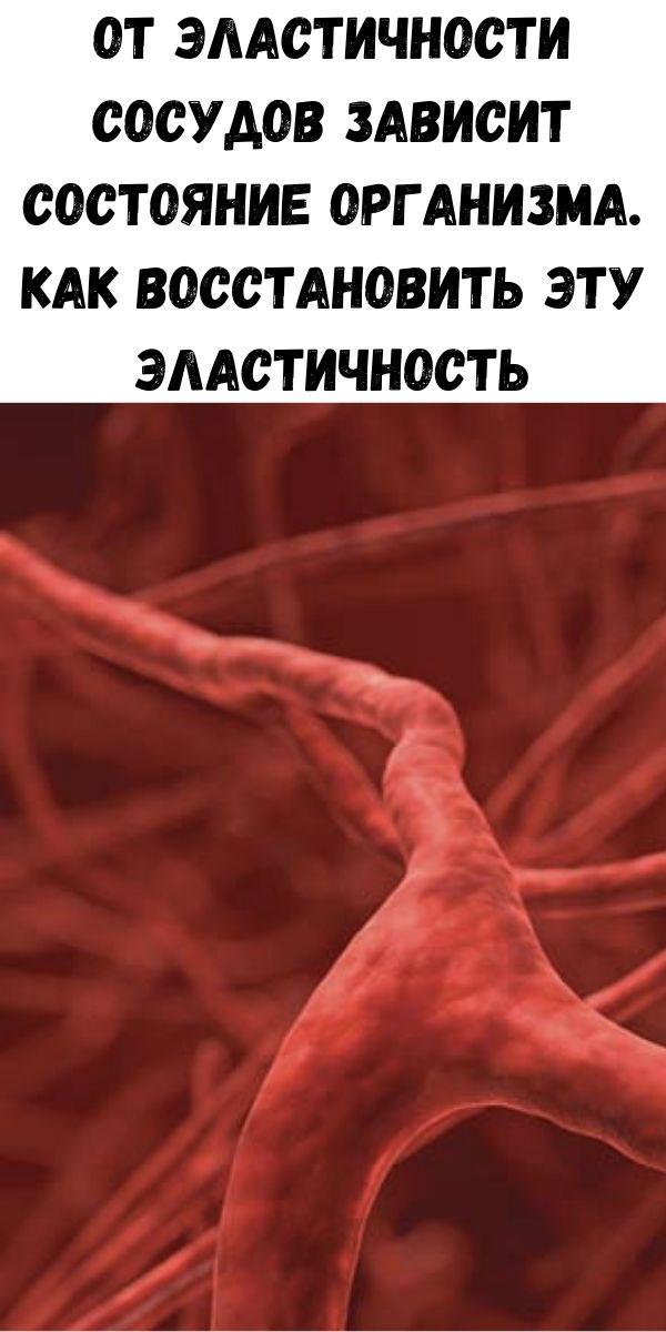 От эластичности сосудов зависит состояние организма. Как восстановить эту эластичность
