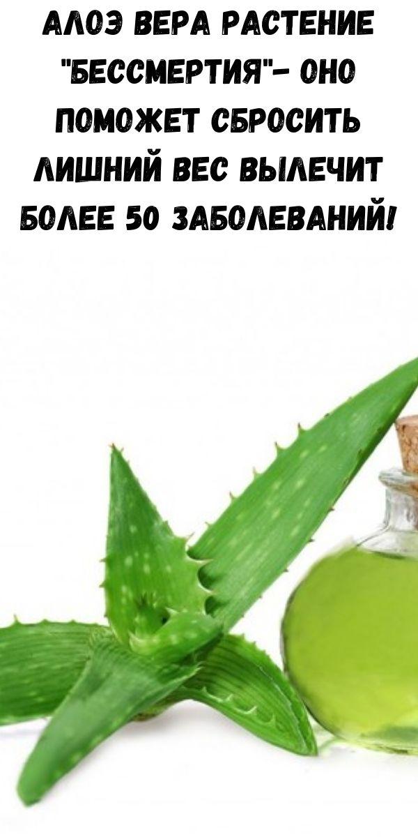 Алоэ Вера растение