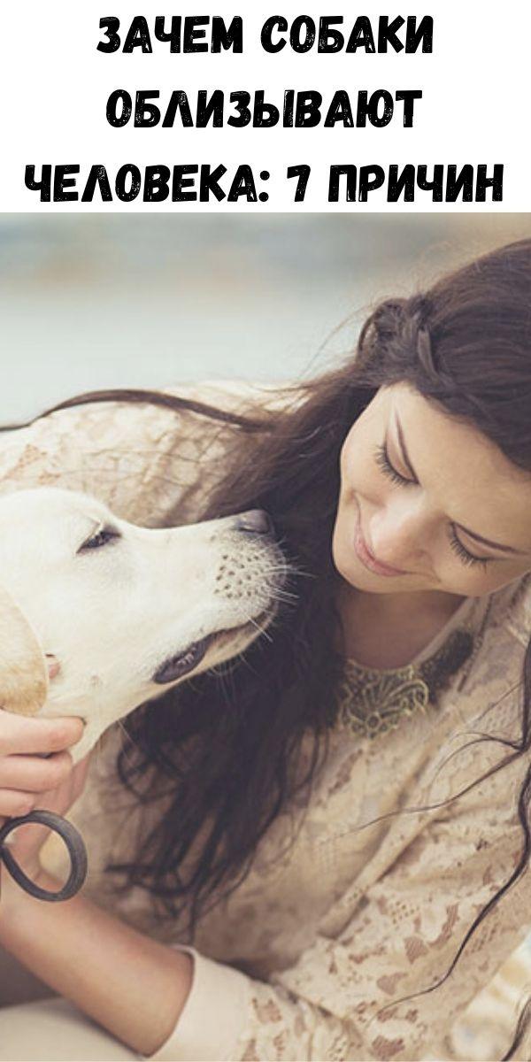 Зачем собаки облизывают человека: 7 причин