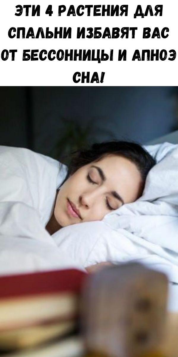 Эти 4 растения для спальни избавят вас от бессонницы и апноэ сна!