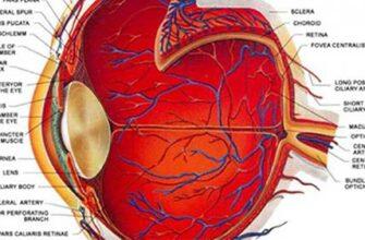 Абсолютно умопомрачительный способ улучшения зрения, чтобы вы могли видеть без очков