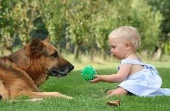 5 причин завести собаку людям, страдающим от депрессии, тревожности или аутизма